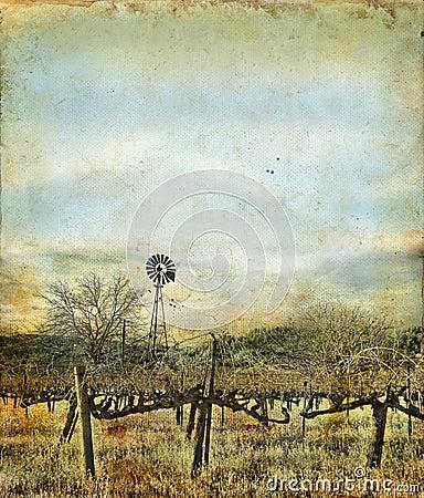 Windmill in Vineyard on a Grunge Background