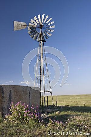 Windmill, water pump and concrete tank in shortgra
