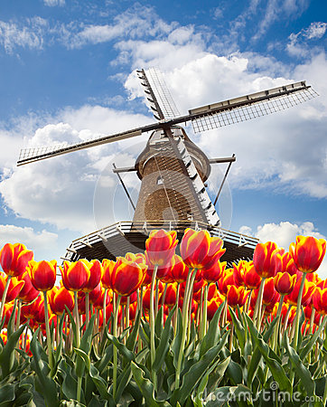 Free Windmill With Tulips, Holland Stock Image - 25167731