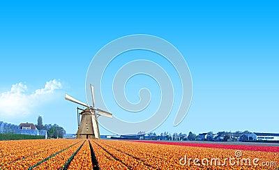 Windmill at the Yellow Tulip Bulb Farm