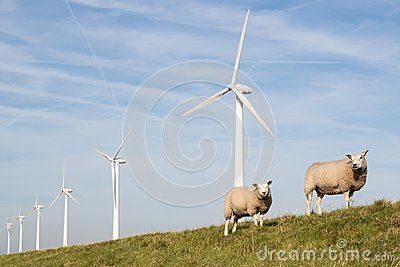 Windmills and sheep in the Netherlands