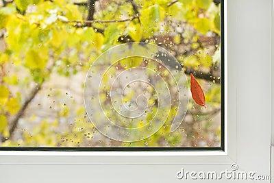 Window / autumn