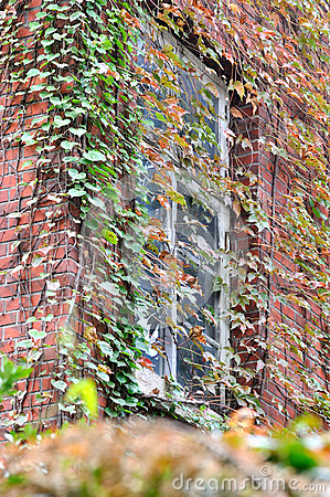 Window and color leaves on wall