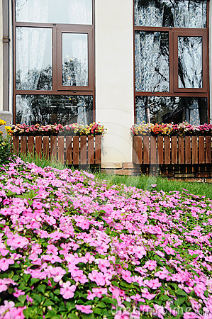 Window with a flower-bed