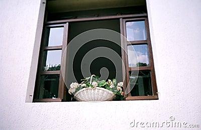 Window flower. Croatia