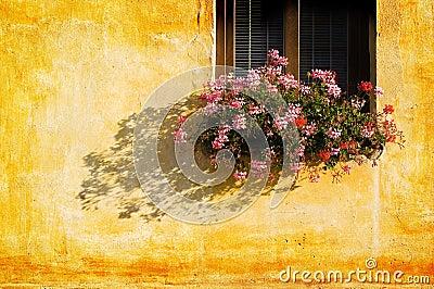 Window flowers wall