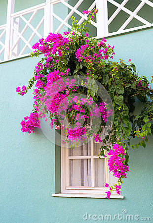 The window framed with flowers