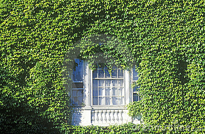 Window framed by ivy,