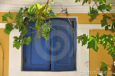 Window With Grape Vine
