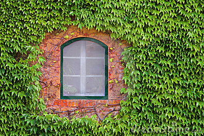 Window Through Green