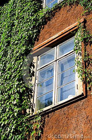 Window with green ivy
