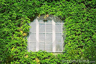 Window in green leaves