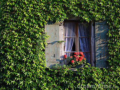 Window on ivy covered wall