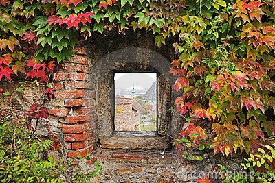 Window with ivy in the fortress wall