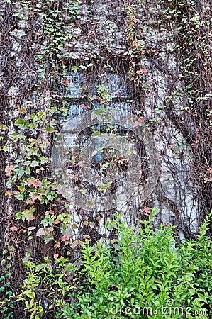 Window among liana