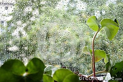 Window after rain