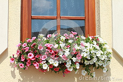 Window with red and white flowers