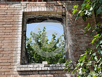 Window to nature through the devastation