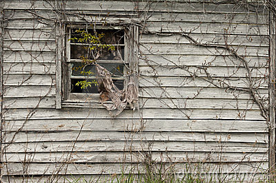 Window with vines