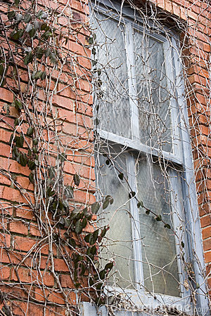 Window & Vines