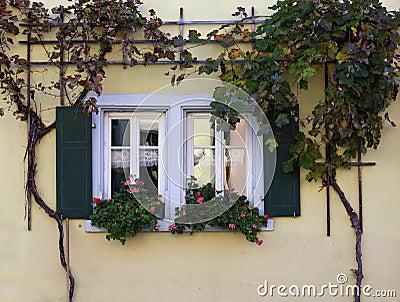 Windows and Vines