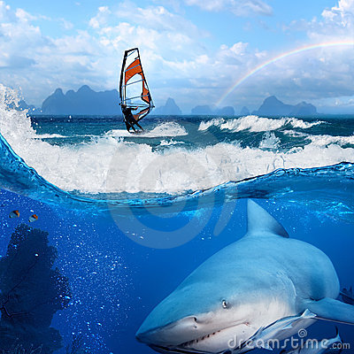 Windsurfer in ocean and wild shark underwater