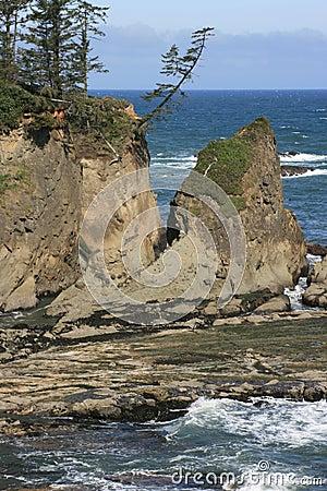 Windswept Coastal Tree