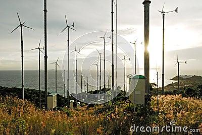 Windturbine in koh lan, pattaya, thailand