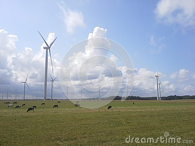 Windturbines and cows landscape