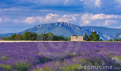 Windy afternoon in Provence