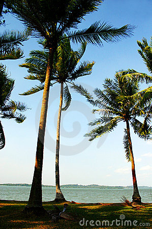 Free Windy Beach Seaside Royalty Free Stock Photography - 4952397