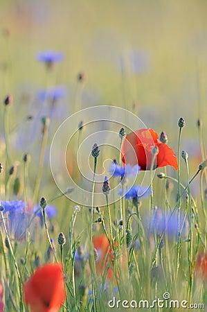 Windy grass field