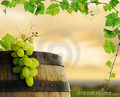 Wine barrel with grape and vine