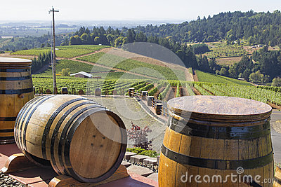 Wine Barrels in Vineyard