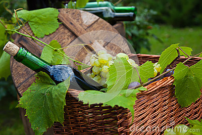 Wine Bottle Grapes Basket Vine