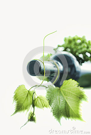 Wine bottle with green leaf