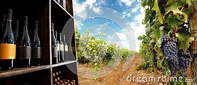 Wine bottle and vineyard