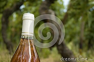 Wine bottle, in a vineyard.