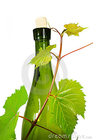 Wine bottle with young grape vine branch