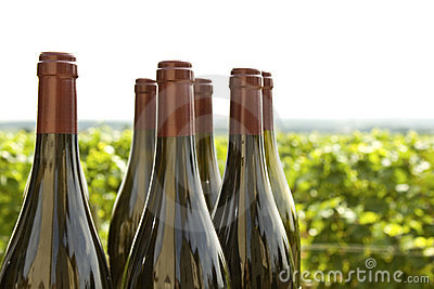 Wine bottles, vineyard Bourgogne.