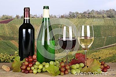 Wine in bottles in the vineyards