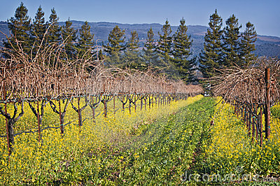 Wine Country, Napa Valley Vineyard, California