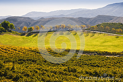 Wine Country, Temecula, Southern California