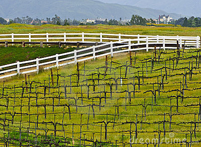 Wine Country Vineyard, Southern California