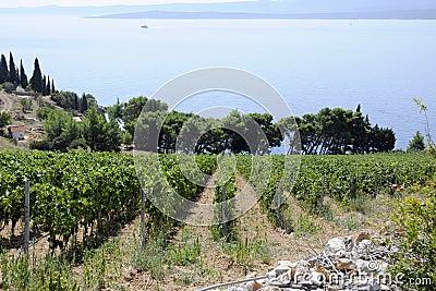 Wine country vineyards