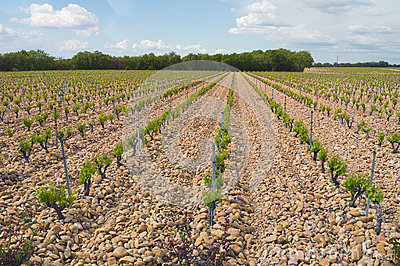 Wine Country Vineyards, Cotes du Rhone, France