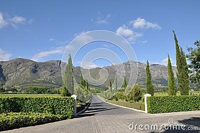 Wine estate cape  Franschhoek south africa