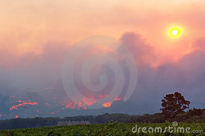 Wine farm close to forest fire
