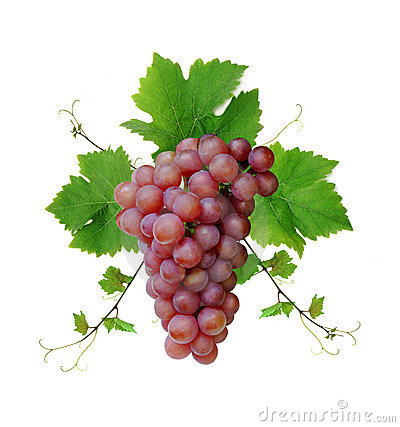 Free Wine Grape Cluster Stock Image - 5595141