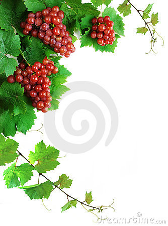 Free Wine Grapes Decoration Stock Photography - 3067092